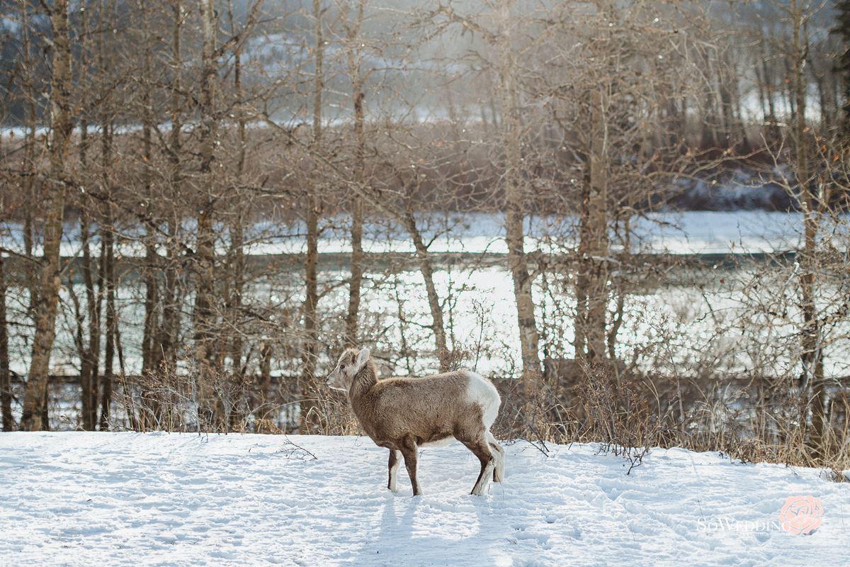 Banff PreWedding Photography